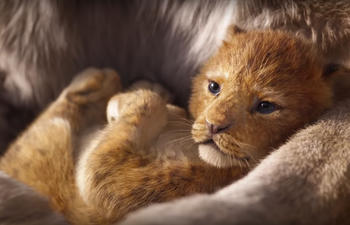 Sorties à la maison : The Lion King