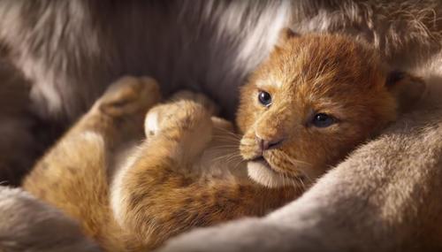 Sorties à la maison : The Lion King