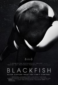Blackfish l'orque tueuse
