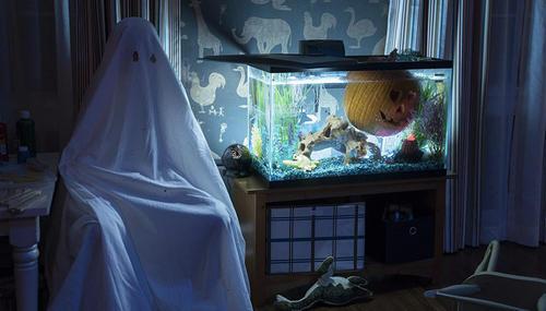 Nouveautés : Halloween et The Hate U Give